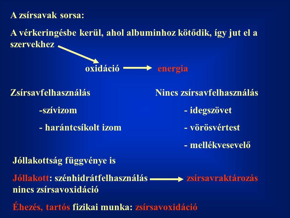 A zsírsavak sorsa: A vérkeringésbe kerül, ahol albuminhoz kötődik, így jut el a szervekhez oxidációenergia Zsírsavfelhasználás -szívizom - harántcsíkolt izom Nincs zsírsavfelhasználás - idegszövet - vörösvértest - mellékvesevelő Jóllakottság függvénye is Jóllakott: szénhidrátfelhasználászsírsavraktározás nincs zsírsavoxidáció Éhezés, tartós fizikai munka: zsírsavoxidáció