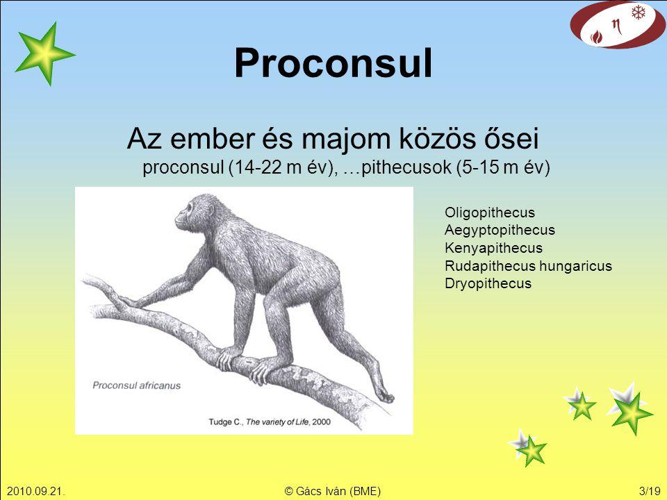 2010.09.21.© Gács Iván (BME)3/19 Az ember és majom közös ősei proconsul (14-22 m év), …pithecusok (5-15 m év) Proconsul Oligopithecus Aegyptopithecus