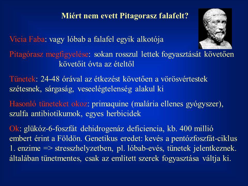 Miért nem evett Pitagorasz falafelt? Vicia Faba: vagy lóbab a falafel egyik alkotója Pitagórasz megfigyelése: sokan rosszul lettek fogyasztását követő