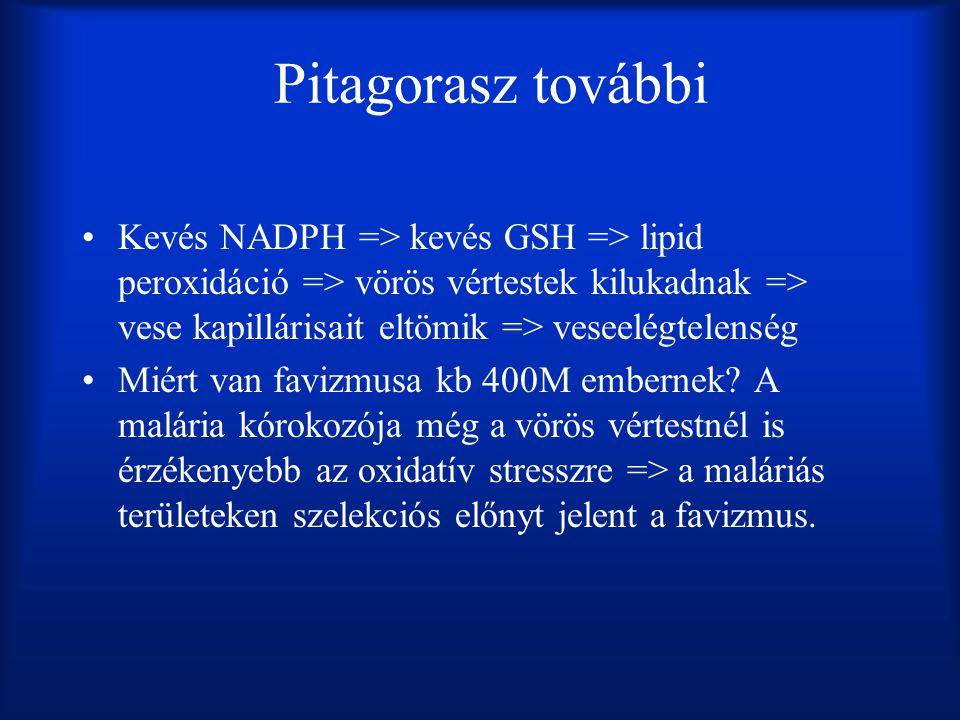 Pitagorasz további Kevés NADPH => kevés GSH => lipid peroxidáció => vörös vértestek kilukadnak => vese kapillárisait eltömik => veseelégtelenség Miért