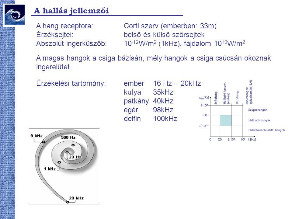 A hallás jellemzői A hang receptora: Corti szerv (emberben: 33m) Érzéksejtei: belső és külső szőrsejtek Abszolút ingerküszöb: 10 -12 W/m 2 (1kHz), fájdalom 10 10 W/m 2 A magas hangok a csiga bázisán, mély hangok a csiga csúcsán okoznak ingerelütet.