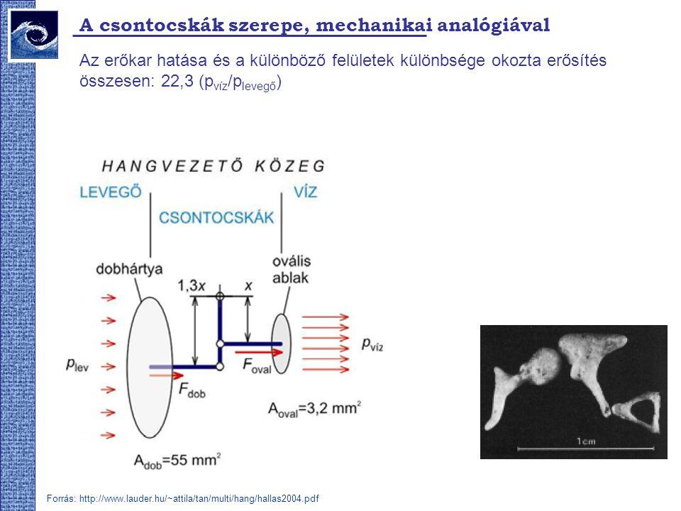 A csontocskák szerepe, mechanikai analógiával Az erőkar hatása és a különböző felületek különbsége okozta erősítés összesen: 22,3 (p víz /p levegő ) F