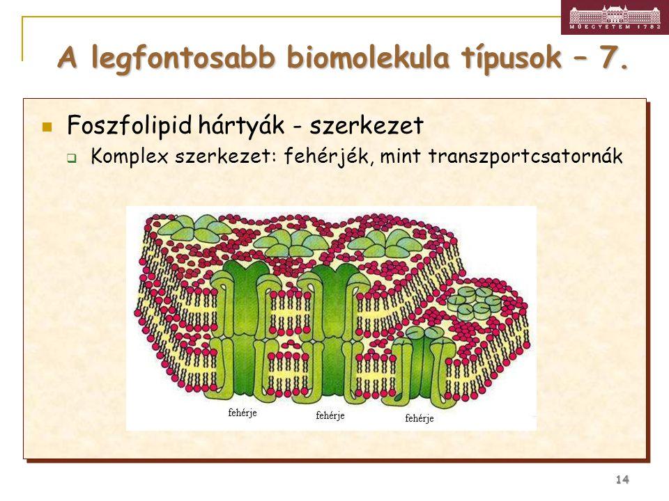 14 Foszfolipid hártyák - szerkezet  Komplex szerkezet: fehérjék, mint transzportcsatornák A legfontosabb biomolekula típusok – 7.