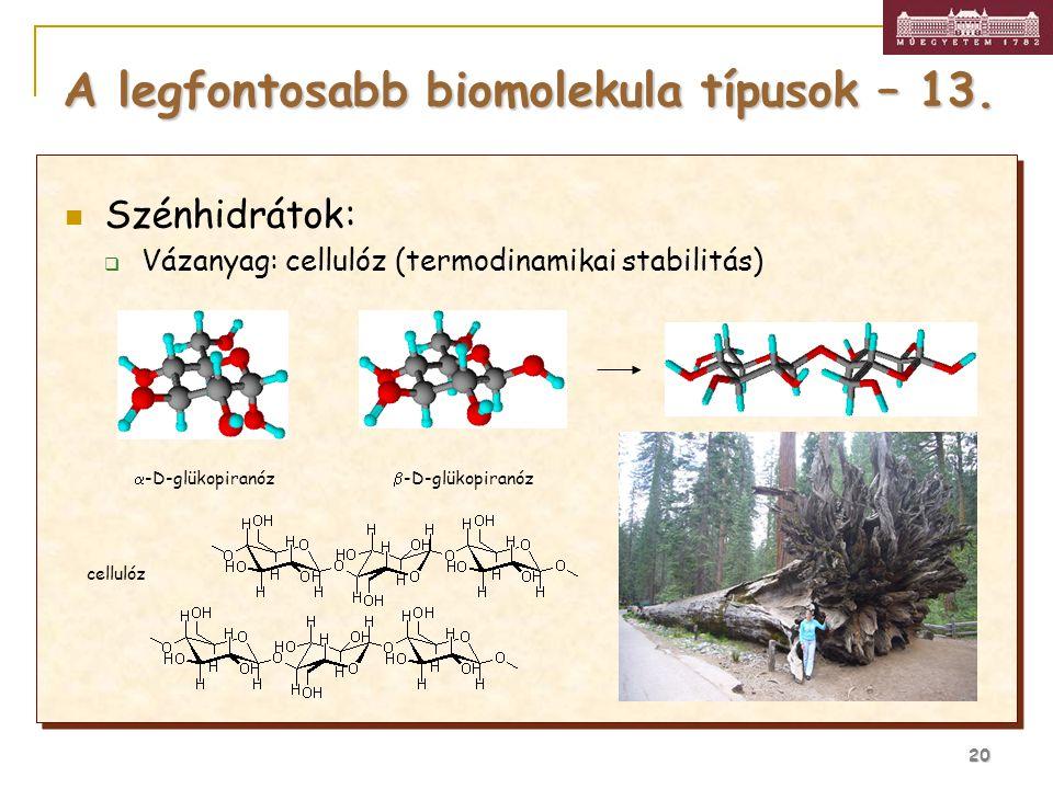 20 Szénhidrátok:  Vázanyag: cellulóz (termodinamikai stabilitás) A legfontosabb biomolekula típusok – 13.  -D-glükopiranóz  -D-glükopiranózcellobió