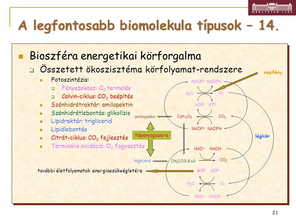21 Bioszféra energetikai körforgalma  Összetett ökoszisztéma körfolyamat-rendszere Fotoszintézis:  Fényszakasz: O 2 termelés  Calvin-ciklus: CO 2 b