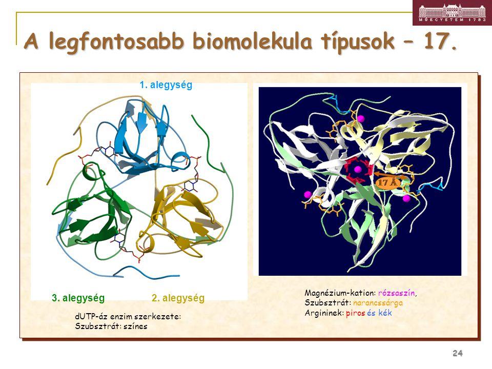24 A legfontosabb biomolekula típusok – 17. 1. alegység 2. alegység3. alegység Magnézium-kation: rózsaszín, Szubsztrát: narancssárga Argininek: piros
