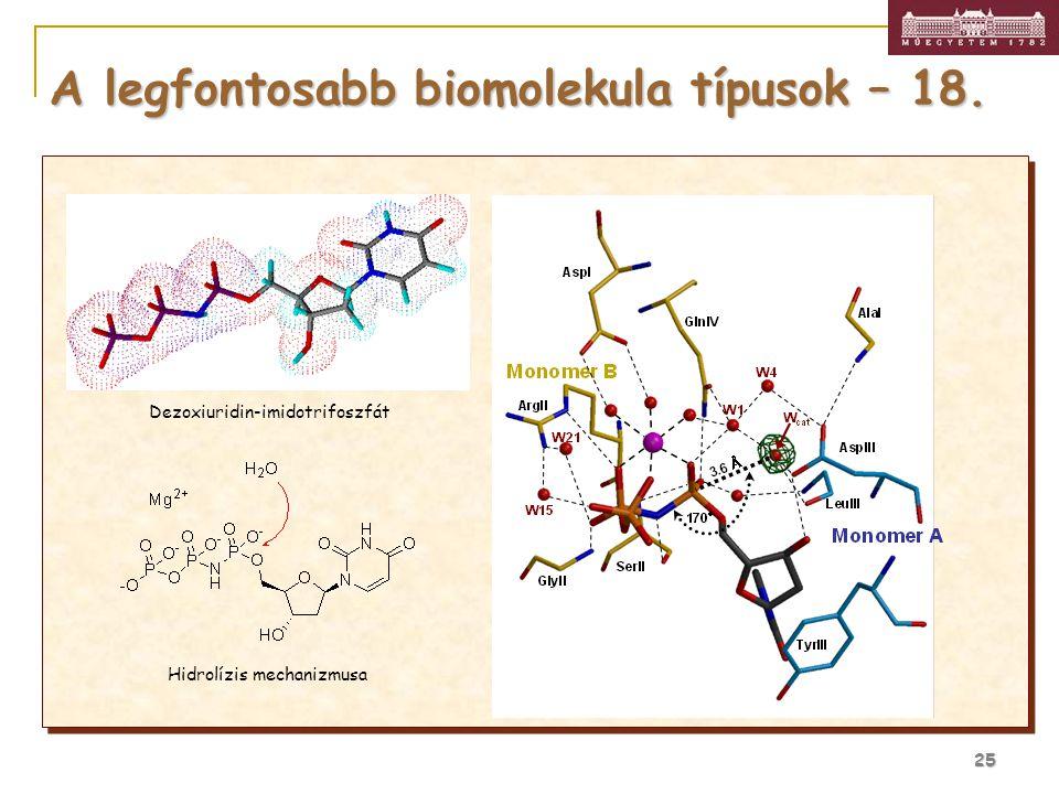 25 Dezoxiuridin-imidotrifoszfát Hidrolízis mechanizmusa A legfontosabb biomolekula típusok – 18.
