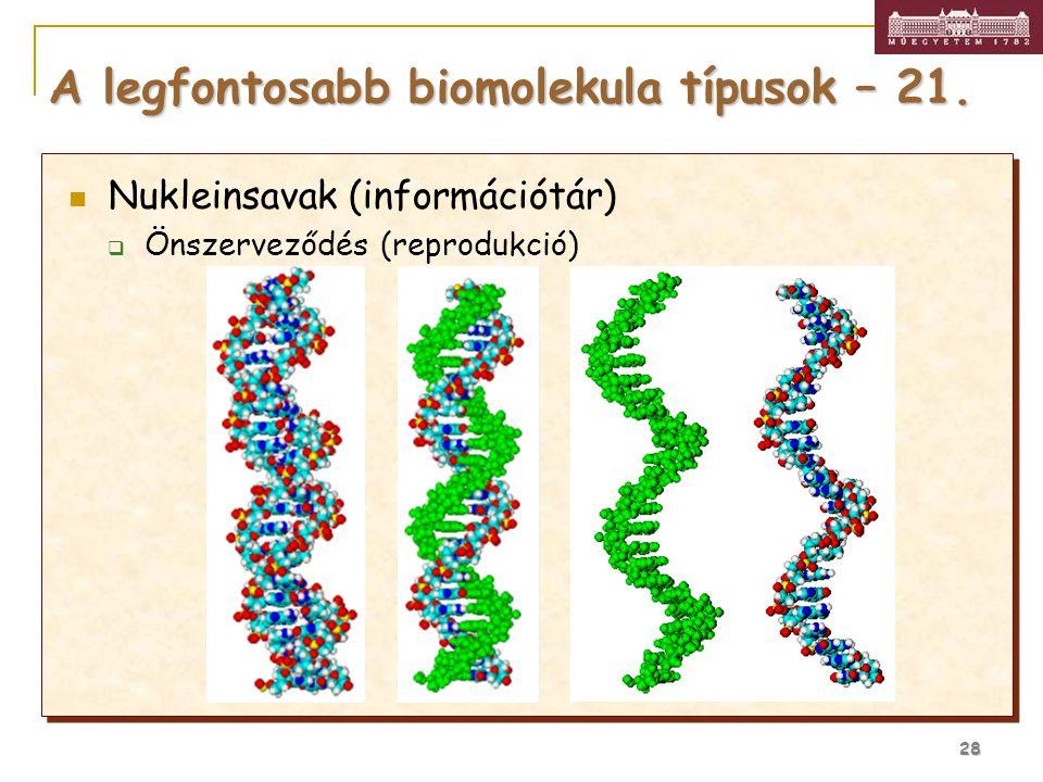 28 A legfontosabb biomolekula típusok – 21. Nukleinsavak (információtár)  Önszerveződés (reprodukció)