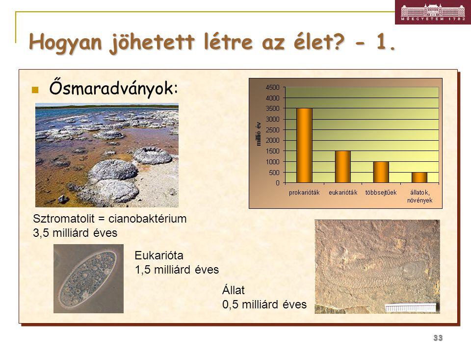 33 Hogyan jöhetett létre az élet? - 1. Ősmaradványok: Sztromatolit = cianobaktérium 3,5 milliárd éves Eukarióta 1,5 milliárd éves Állat 0,5 milliárd é