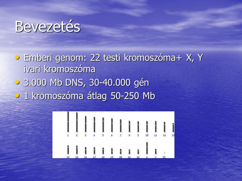 Bevezetés Emberi genom: 22 testi kromoszóma+ X, Y ivari kromoszóma Emberi genom: 22 testi kromoszóma+ X, Y ivari kromoszóma 3.000 Mb DNS, 30-40.000 gé