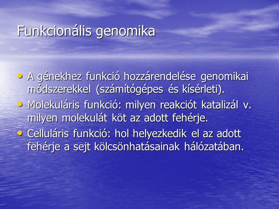Funkcionális genomika módszerei Homológián alapuló Homológián alapuló Szerkezeti genomikai módszer Szerkezeti genomikai módszer Nem homológián alapuló (új bioinformatikai módszerek): Nem homológián alapuló (új bioinformatikai módszerek): –Tisztán számítógépes: Filogenetikai profilok módszere Filogenetikai profilok módszere Rosetta-kő módszer Rosetta-kő módszer Szomszédos gének módszer Szomszédos gének módszer –Kísérleti alapú: Korrelált génexpressziók módszere Korrelált génexpressziók módszere