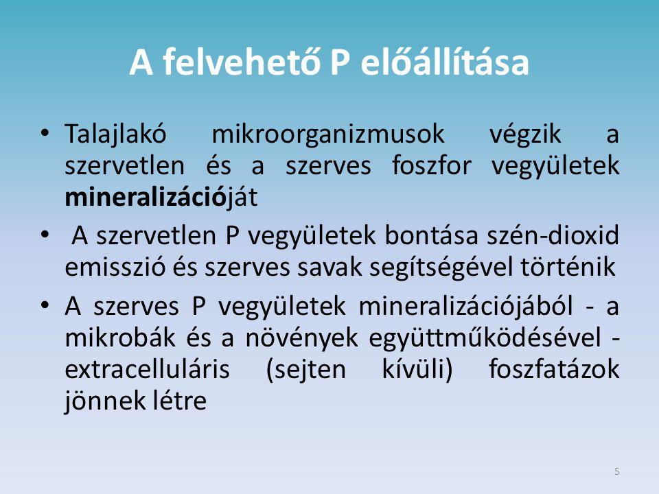 5 A felvehető P előállítása Talajlakó mikroorganizmusok végzik a szervetlen és a szerves foszfor vegyületek mineralizációját A szervetlen P vegyületek