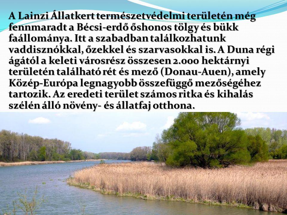 A Lainzi Állatkert természetvédelmi területén még fennmaradt a Bécsi-erdő őshonos tölgy és bükk faállománya. Itt a szabadban találkozhatunk vaddisznók