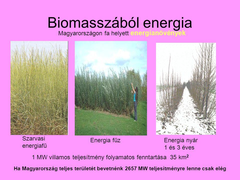 Biomasszából energia Magyarországon fa helyett energianövények Szarvasi energiafű Energia fűzEnergia nyár 1 és 3 éves 1 MW villamos teljesítmény folyamatos fenntartása 35 km 2 Ha Magyarország teljes területét bevetnénk 2657 MW teljesítményre lenne csak elég
