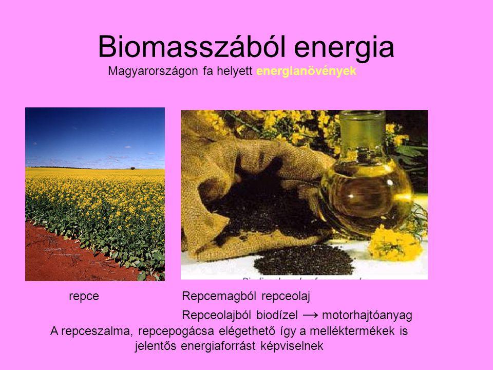 Biomasszából energia Magyarországon fa helyett energianövények repceRepcemagból repceolaj Repceolajból biodízel → motorhajtóanyag A repceszalma, repcepogácsa elégethető így a melléktermékek is jelentős energiaforrást képviselnek