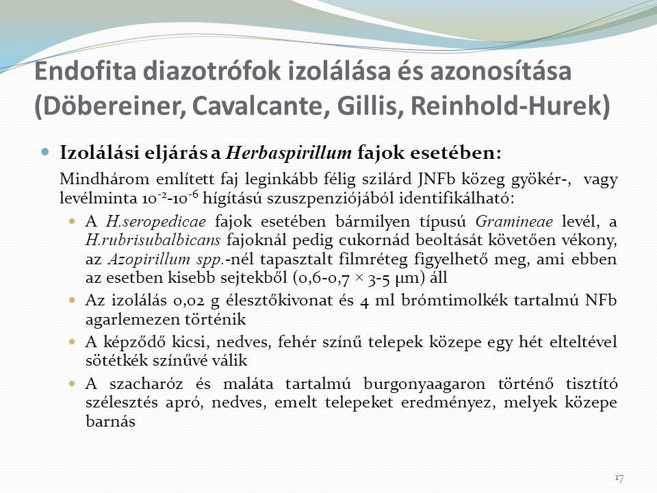 Izolálási eljárás a Herbaspirillum fajok esetében: Mindhárom említett faj leginkább félig szilárd JNFb közeg gyökér-, vagy levélminta 10 -2 -10 -6 híg