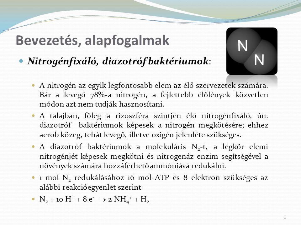 Nitrogénfixáló, diazotróf baktériumok: A nitrogén az egyik legfontosabb elem az élő szervezetek számára. Bár a levegő 78%-a nitrogén, a fejlettebb élő