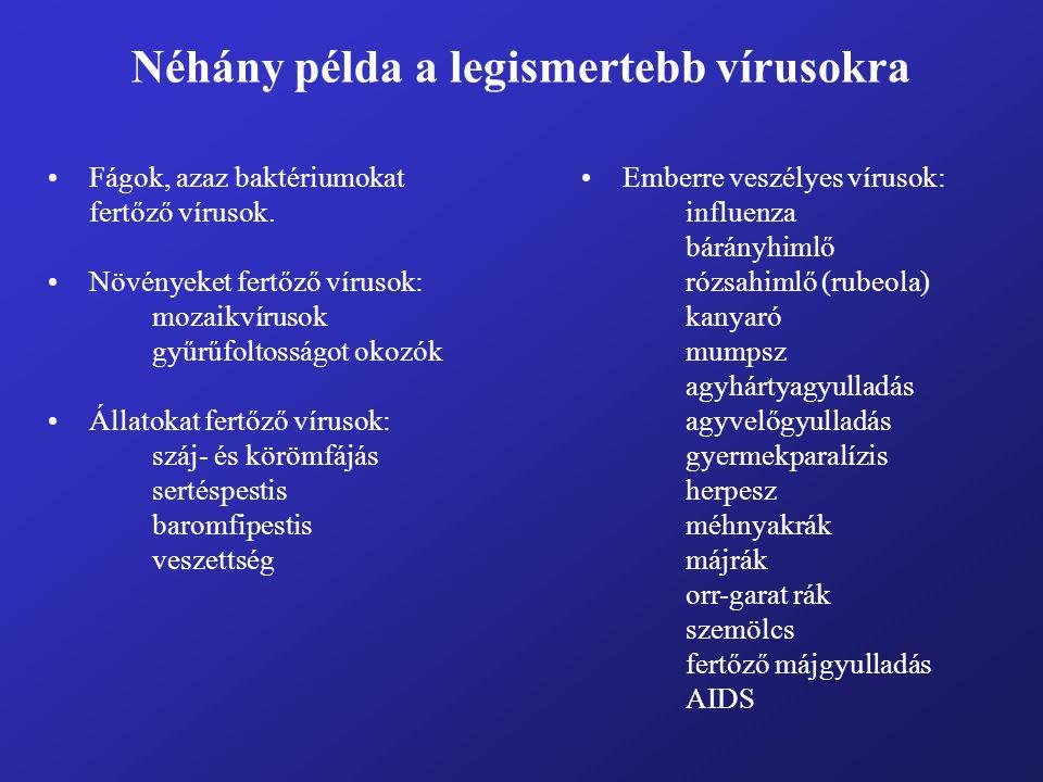 Néhány példa a legismertebb vírusokra Fágok, azaz baktériumokat fertőző vírusok. Növényeket fertőző vírusok: mozaikvírusok gyűrűfoltosságot okozók Áll