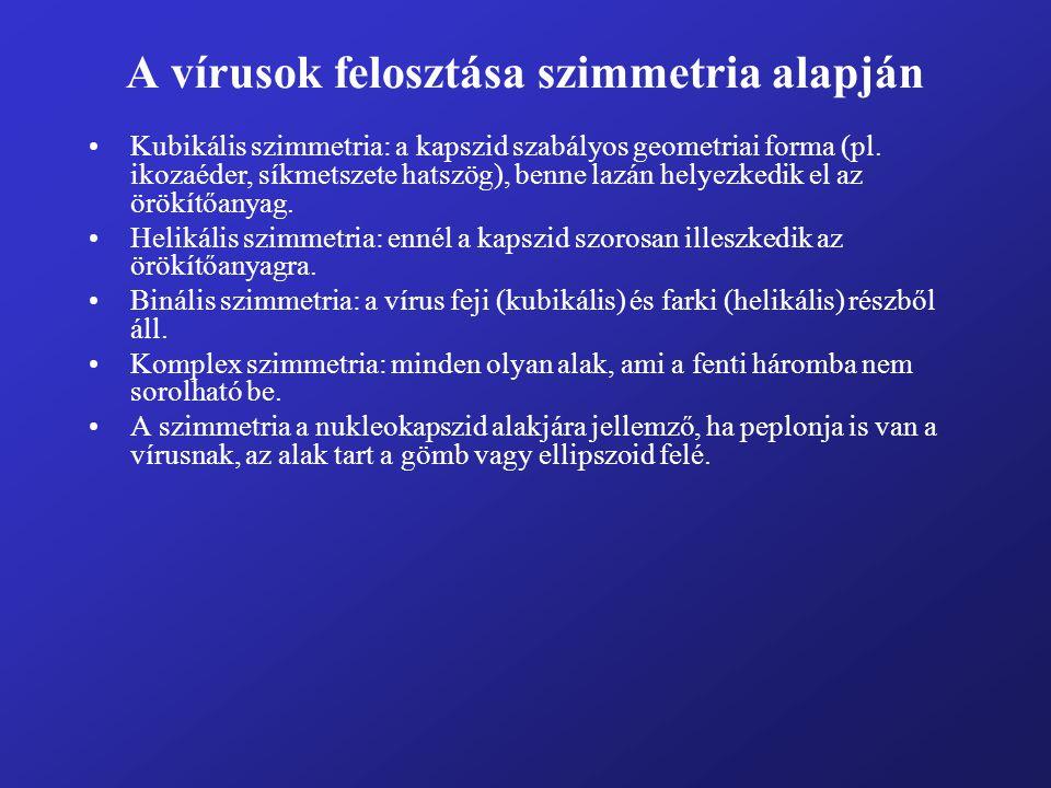 A vírusok felosztása szimmetria alapján Kubikális szimmetria: a kapszid szabályos geometriai forma (pl. ikozaéder, síkmetszete hatszög), benne lazán h