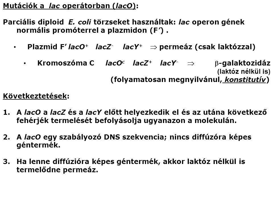 Mutációk a lac operátorban (lacO): Parciális diploid E. coli törzseket használtak: lac operon gének normális promóterrel a plazmidon (F'). Plazmid F'l