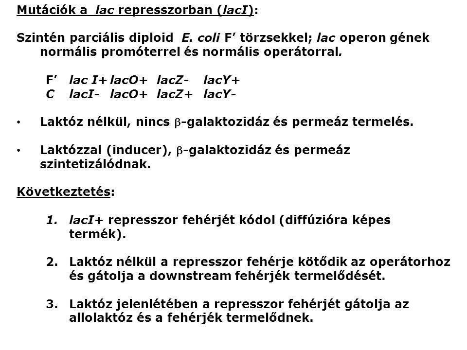 Mutációk a lac represszorban (lacI): Szintén parciális diploid E. coli F' törzsekkel; lac operon gének normális promóterrel és normális operátorral. F