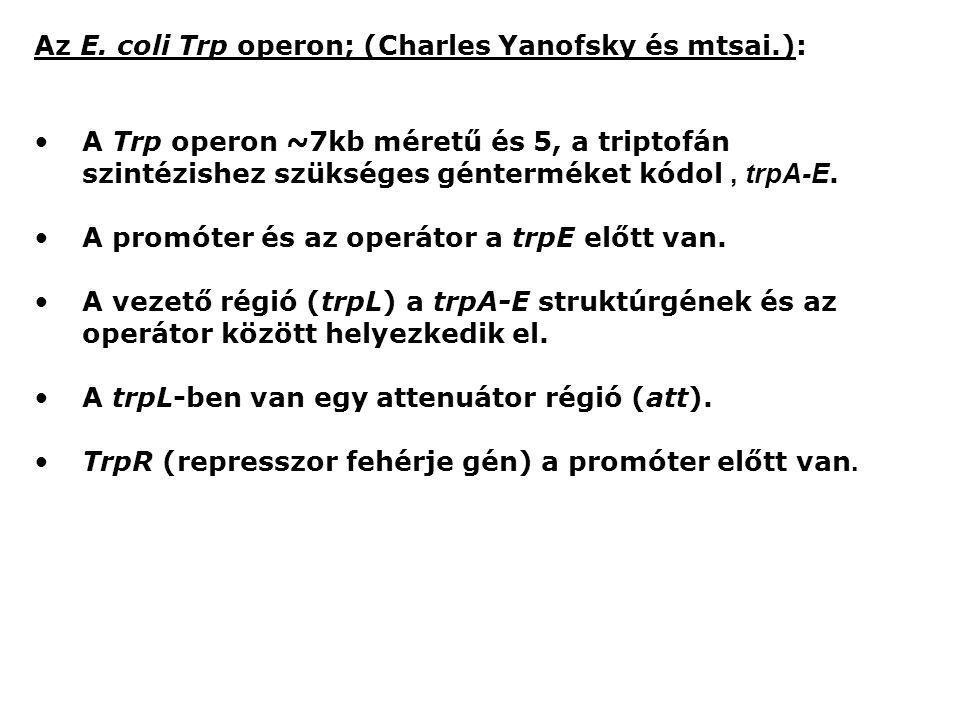 Az E. coli Trp operon; (Charles Yanofsky és mtsai.): A Trp operon ~7kb méretű és 5, a triptofán szintézishez szükséges génterméket kódol, trpA-E. A pr