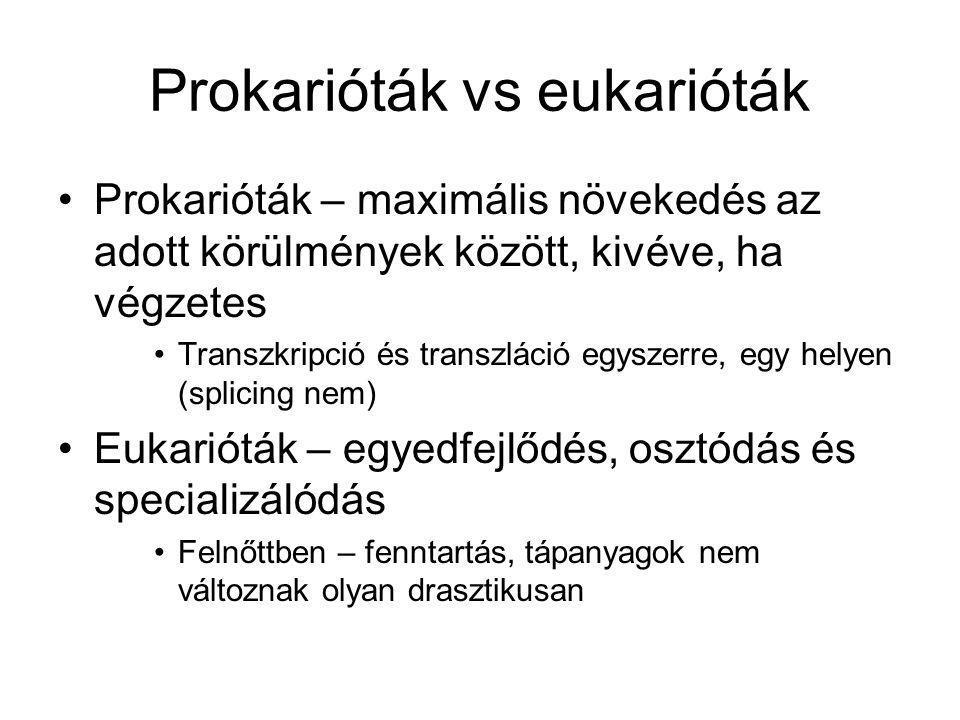 Transzkripció szabályozása prokariótákban Gyakran ki/be, csak akkor,ha a géntermék kell (A Ki leggyakrabban nagyon kicsi expressziót jelent (eukariótákban az egyedfejlődésnél)) Koordinált szabályozás – egy, vagy több metabolizmus útvonal génjei együtt, policisztronos mRNS (eukarióta monocisztronos)
