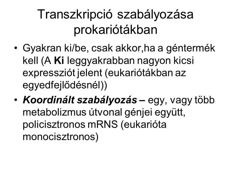 Transzkripció szabályozása prokariótákban Gyakran ki/be, csak akkor,ha a géntermék kell (A Ki leggyakrabban nagyon kicsi expressziót jelent (eukariótá
