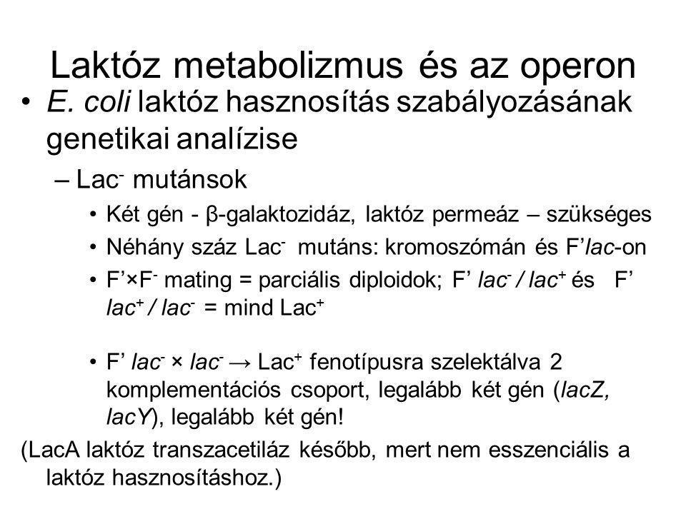 F'lacY - lacZ + /lacY + lacZ - és F'lacY +l acZ - /lacY - lacZ + → Lac + fenotípus F'lacY -l aZ + /lacY - lacZ + és F'lacY + lacZ - /lacY + lacZ - → Lac - fenotípus lacZ → β-galaktozidáz lacY → laktóz permeáz lacZ és lacY nagyon közel, kotranszdukcióval térképezve
