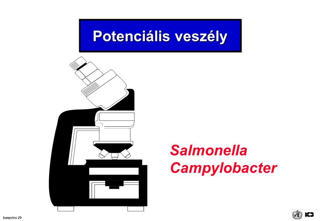 basprinc 29 Potenciális veszély Salmonella Campylobacter