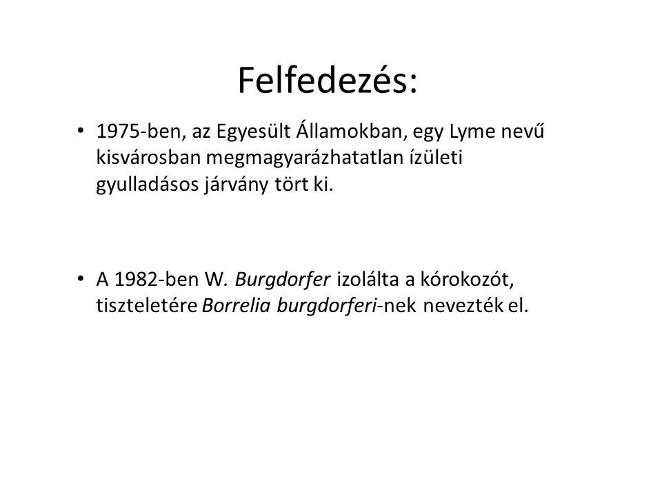 Felfedezés: 1975-ben, az Egyesült Államokban, egy Lyme nevű kisvárosban megmagyarázhatatlan ízületi gyulladásos járvány tört ki. A 1982-ben W. Burgdor
