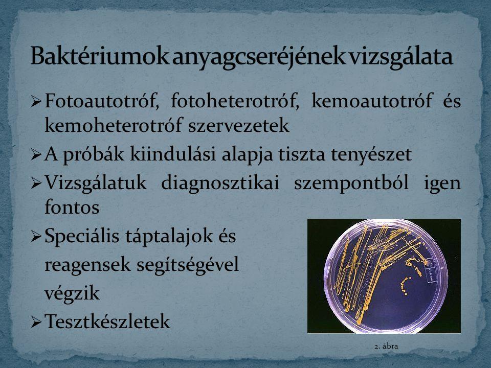  Szénhidrátbontás vizsgálata  Metilvörös próba  OF teszt  Redukáló hatás vizsgálata  Kataláz-próba  Oxidáz próba  Voges-Proskauer próba