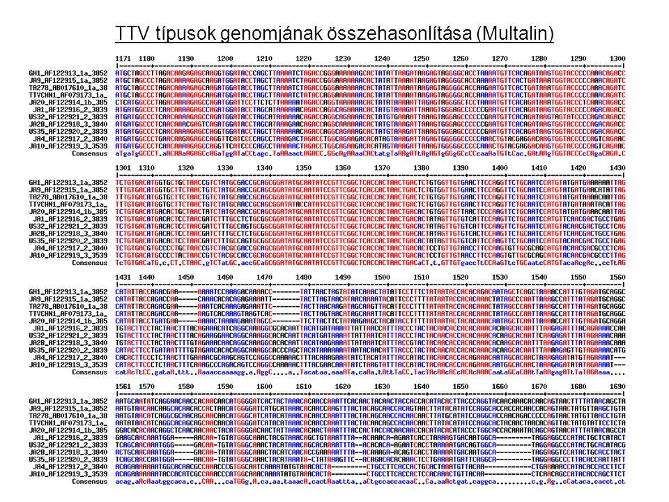 TTV típusok genomjának összehasonlítása (Multalin)