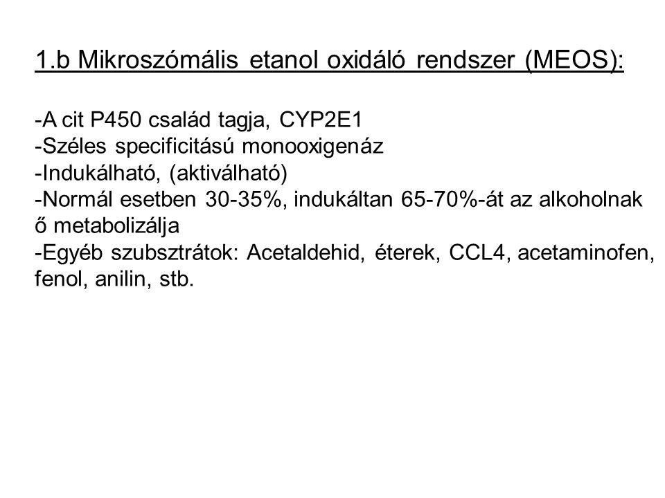 1.b Mikroszómális etanol oxidáló rendszer (MEOS): -A cit P450 család tagja, CYP2E1 -Széles specificitású monooxigenáz -Indukálható, (aktiválható) -Nor