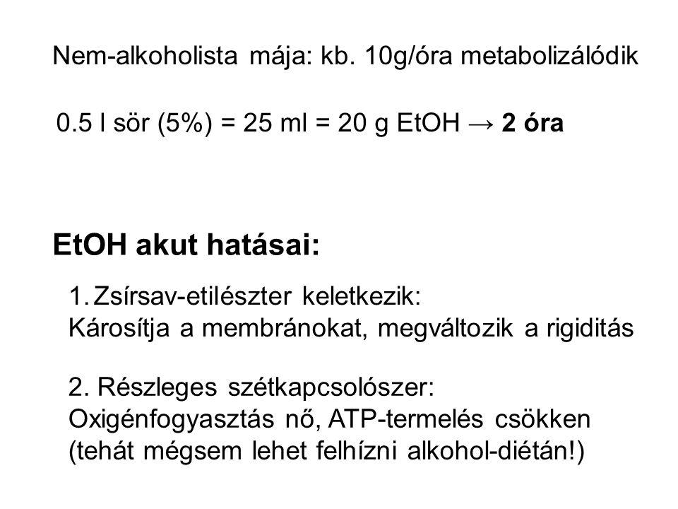 EtOH akut hatásai: 1.Zsírsav-etilészter keletkezik: Károsítja a membránokat, megváltozik a rigiditás 2. Részleges szétkapcsolószer: Oxigénfogyasztás n