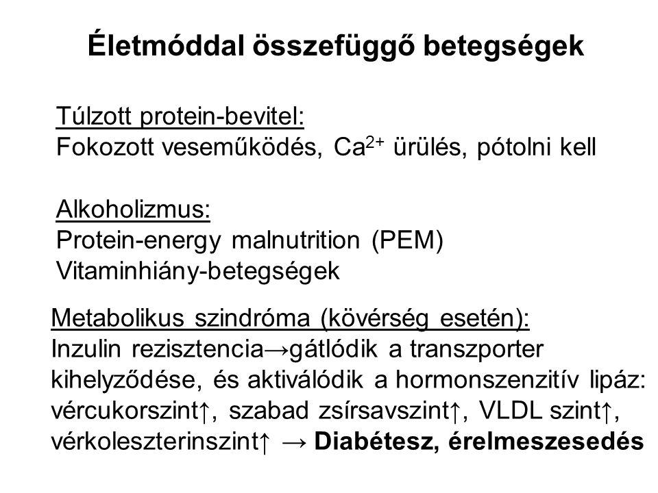 Életmóddal összefüggő betegségek Túlzott protein-bevitel: Fokozott veseműködés, Ca 2+ ürülés, pótolni kell Alkoholizmus: Protein-energy malnutrition (