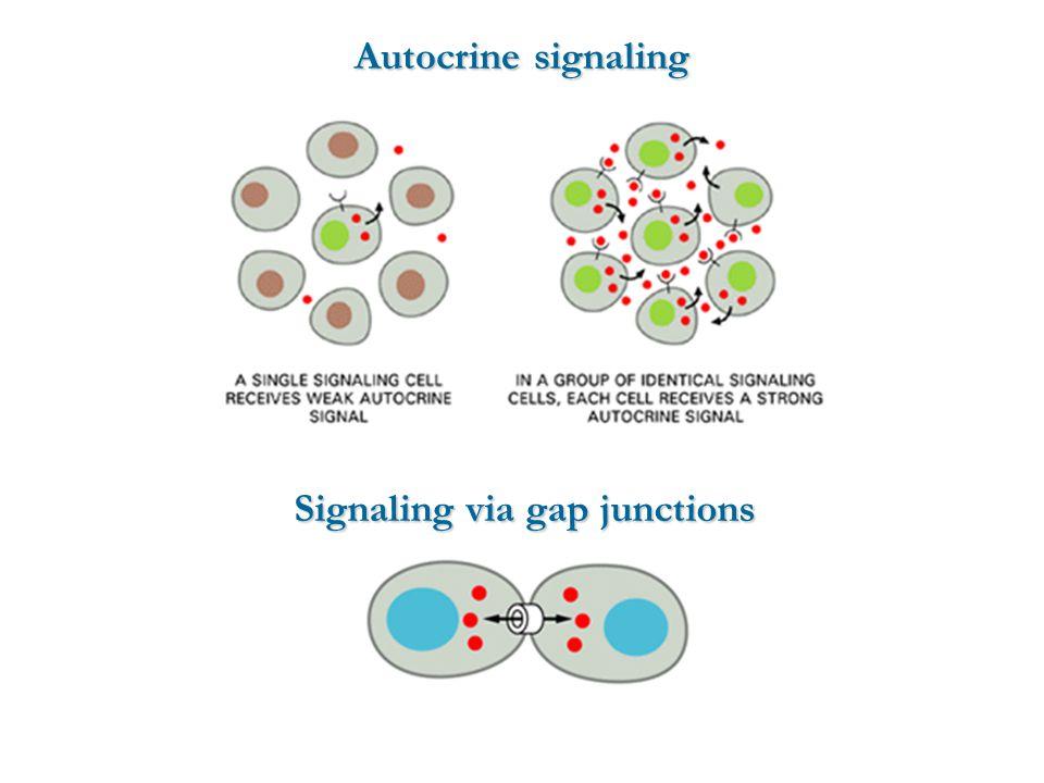 Autocrine signaling Signaling via gap junctions
