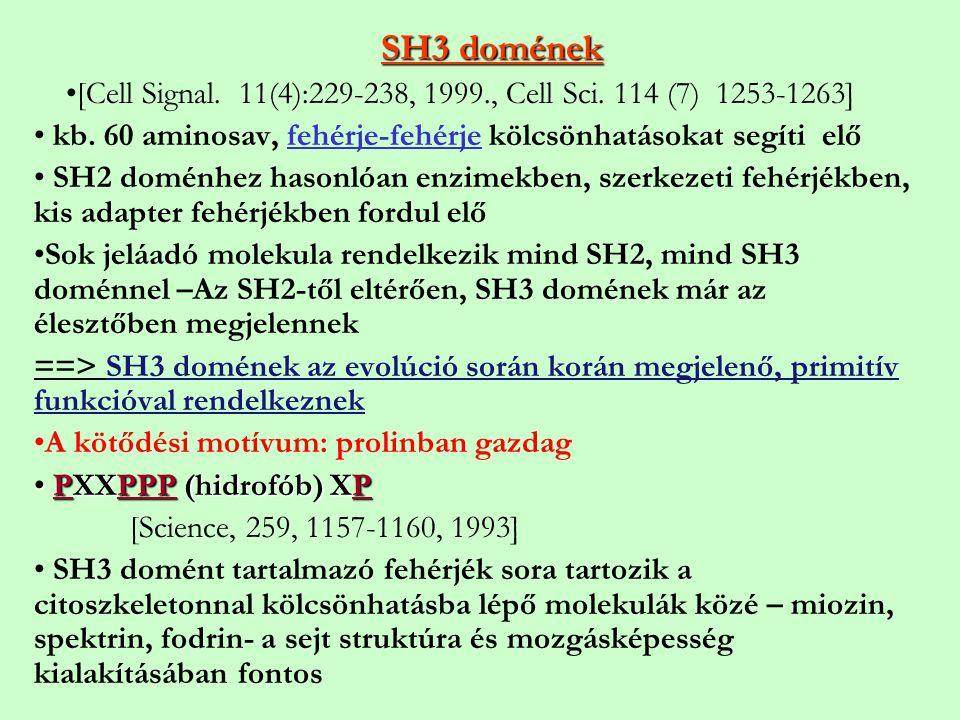 SH3 domének [Cell Signal. 11(4):229-238, 1999., Cell Sci. 114 (7) 1253-1263] kb. 60 aminosav, fehérje-fehérje kölcsönhatásokat segíti elő SH2 doménhez