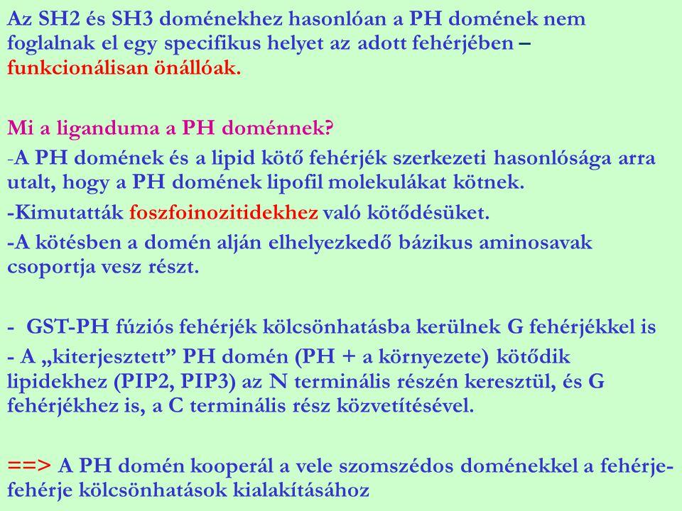 Az SH2 és SH3 doménekhez hasonlóan a PH domének nem foglalnak el egy specifikus helyet az adott fehérjében – funkcionálisan önállóak. Mi a liganduma a