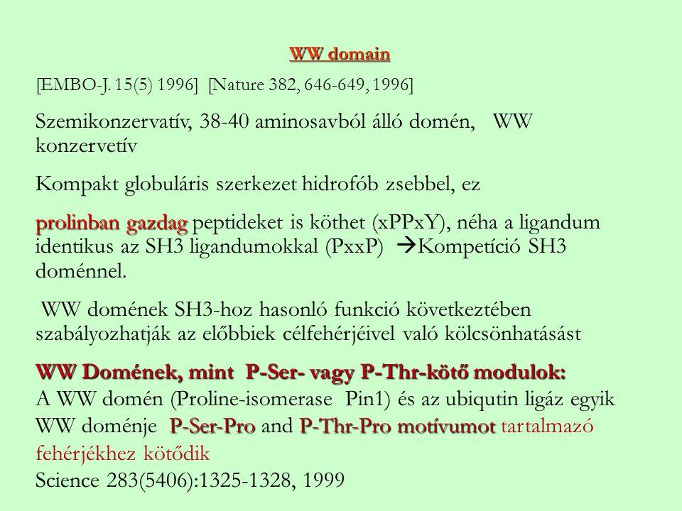 WW domain [EMBO-J. 15(5) 1996] [Nature 382, 646-649, 1996] Szemikonzervatív, 38-40 aminosavból álló domén, WW konzervetív Kompakt globuláris szerkezet