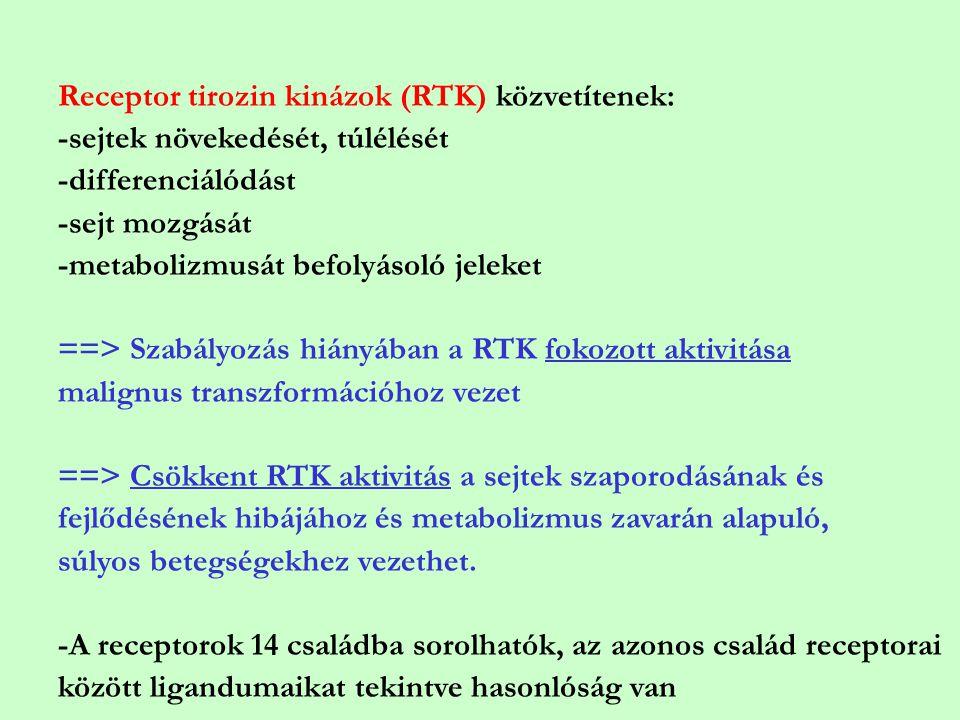 Receptor tirozin kinázok (RTK) közvetítenek: -sejtek növekedését, túlélését -differenciálódást -sejt mozgását -metabolizmusát befolyásoló jeleket ==>