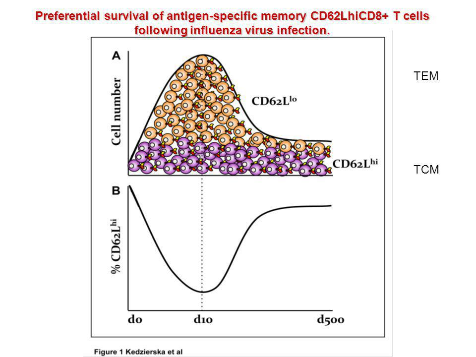 Preferential survival of antigen-specific memory CD62LhiCD8+ T cells following influenza virus infection.