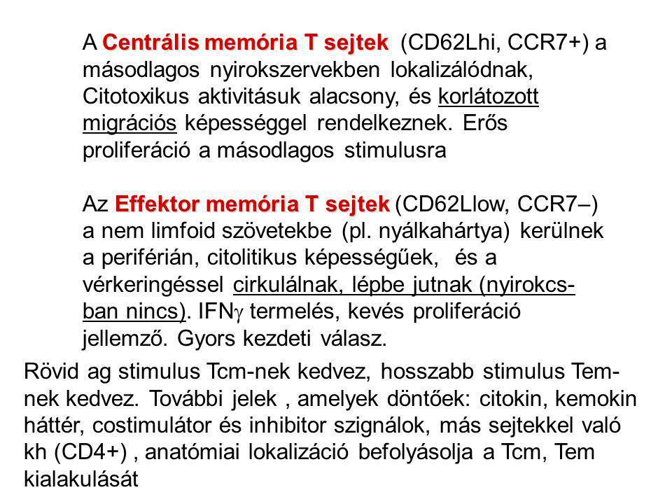Centrális memória T sejtek A Centrális memória T sejtek (CD62Lhi, CCR7+) a másodlagos nyirokszervekben lokalizálódnak, Citotoxikus aktivitásuk alacson