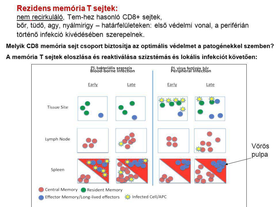 Rezidens memória T sejtek: nem recirkuláló, Tem-hez hasonló CD8+ sejtek, bőr, tüdő, agy, nyálmirigy – határfelületeken: első védelmi vonal, a periféri