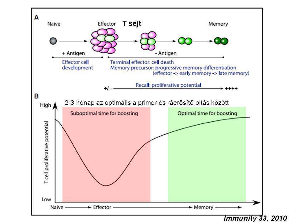 2-3 hónap az optimális a primer és ráerősítő oltás között T sejt Immunity 33, 2010