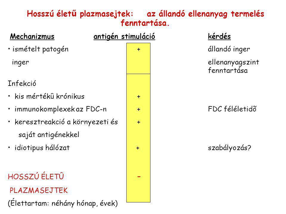 CD27: a memória B sejtek markere CD27– B sejtek CD27+ B sejtek 60 %40 % Keskeny cytoplazma, Nagy cytoplazma Ig termelés alacsony Ig termelés: magas Szomatikus hipermutáció Nincsvan CD27: TNFR család I típusú glykoprotein, CD27+ sejtek száma korral nő, Liganduma: CD70 Plazmasejt képződéshez vezet