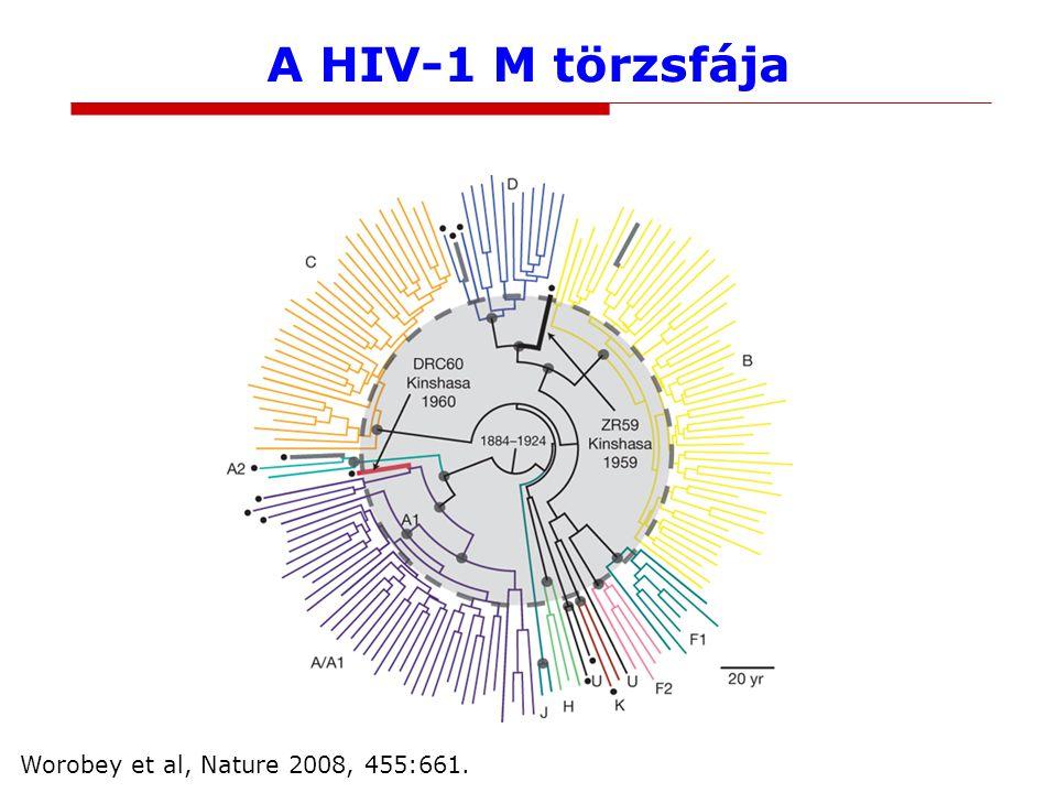 A HIV-1 M törzsfája Worobey et al, Nature 2008, 455:661.
