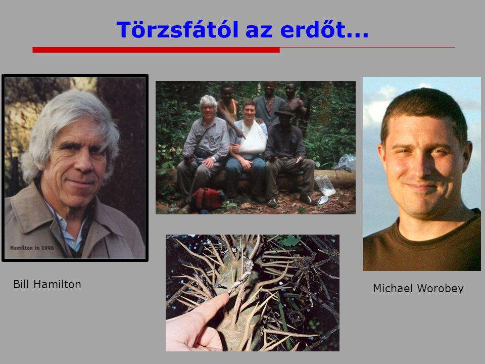 Törzsfától az erdőt... Michael Worobey Bill Hamilton