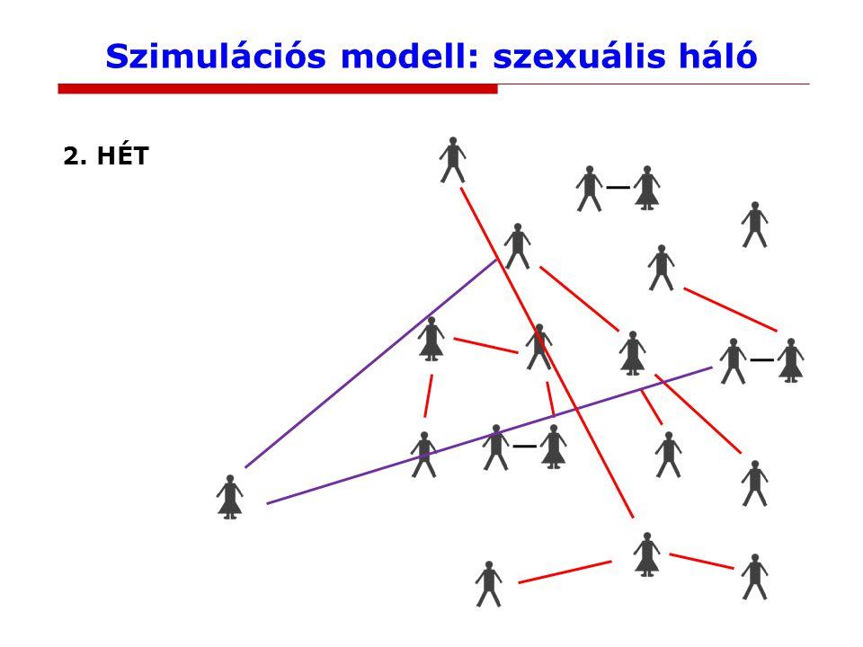Szimulációs modell: szexuális háló 2. HÉT