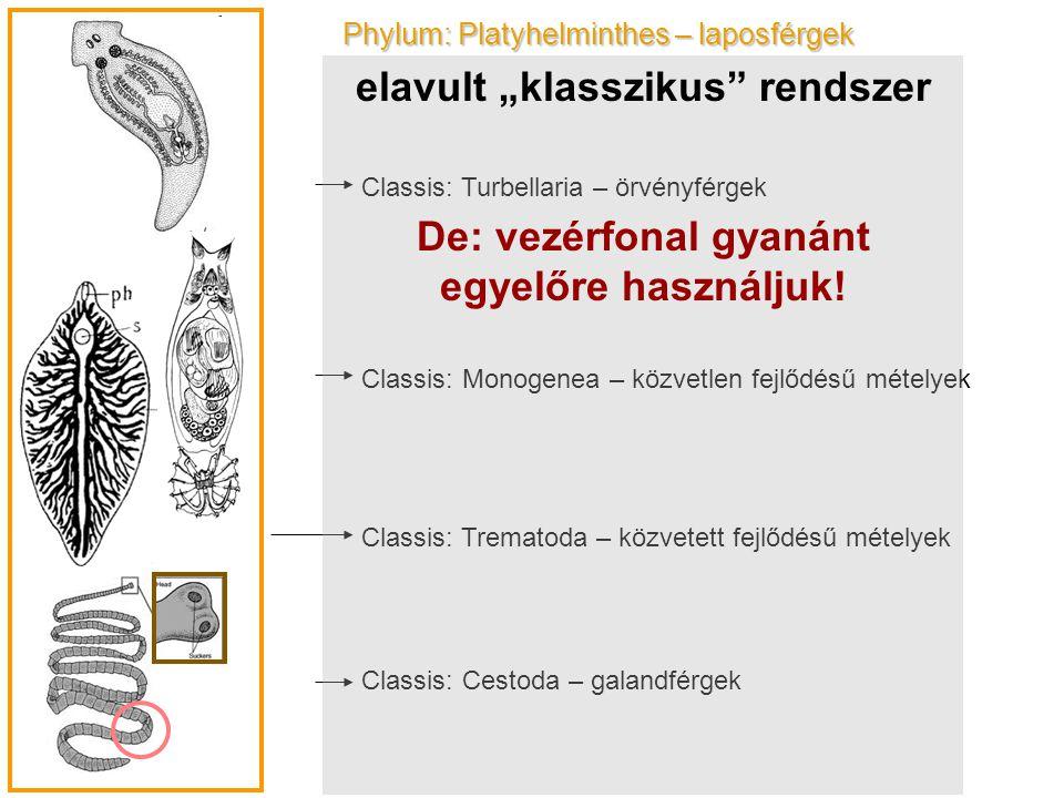Phylum: Platyhelminthes – laposférgek Classis: Turbellaria – örvényférgek Classis: Monogenea – közvetlen fejlődésű mételyek Classis: Trematoda – közve